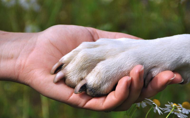 Dogs as soul friends
