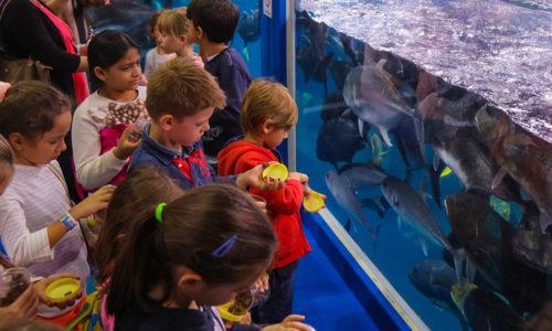 Dubai Aquarium Junior Biologist Summer Program