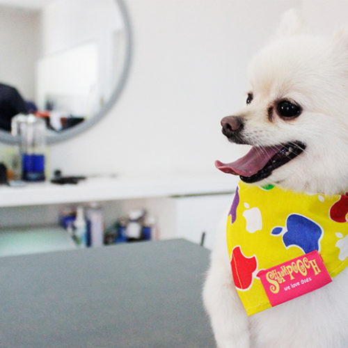 Five reasons to groom your dog regularly