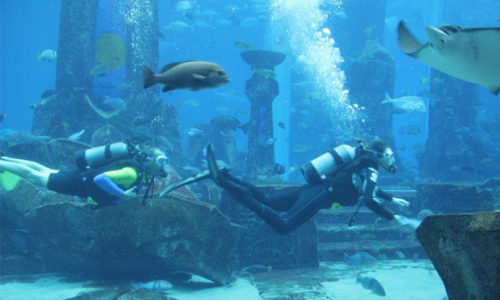 Super summer savings on shark activities at Atlantis The Palm
