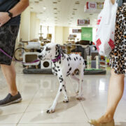 The Pet Shop Dubai to host World Animal Day celebration