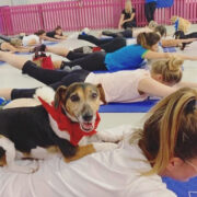 Pet parents! There's a puppy pilates class in Dubai this weekend