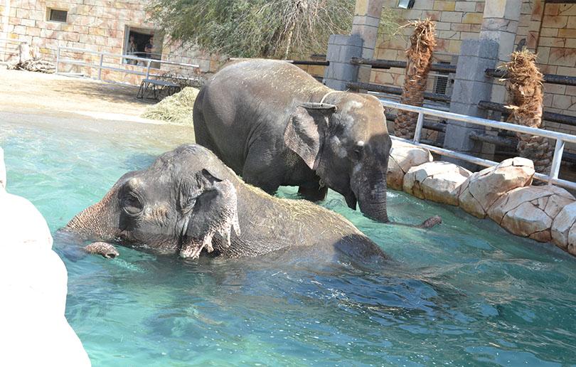 Abu Dhabi Emirates Park Zoo
