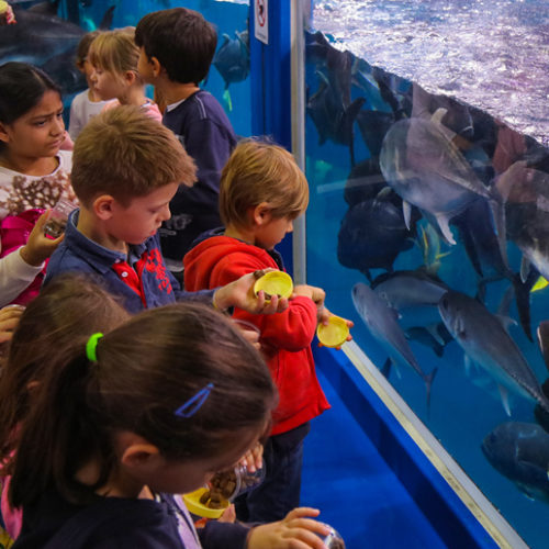 Dubai Aquarium Junior Biologist Summer Program