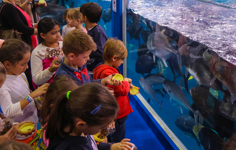 The Dubai Aquarium Junior Biologist Program
