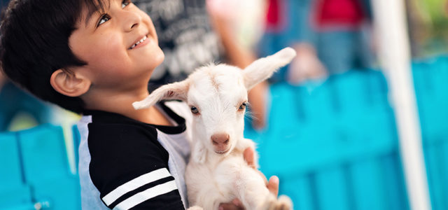 A petting zoo has opened at a Dubai shopping mall