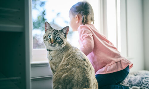 Children and pets: Top tips to encourage playtime with furry friends