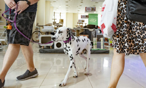 The Pet Shop Dubai to host World Animal Day celebration