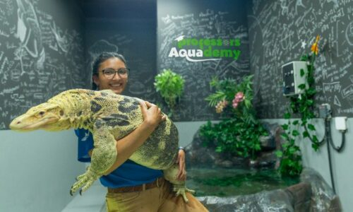 Nominate a teacher to host a class from The National Aquarium